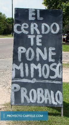 Cerdo Mimoso